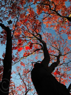 Le géant aux mains d'automne